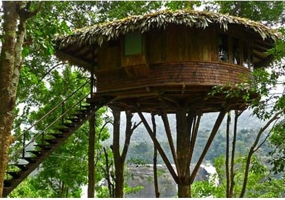Get up on a tree house this weekend!